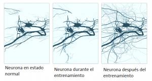 La terapia visual y la plasticidad neuronal